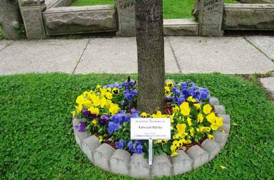 Flowers-for-full-or-half-borders