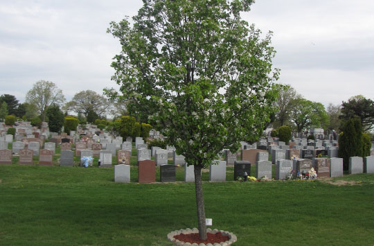 Memorial-Tree-at-Cypress-Hills-Cemetery