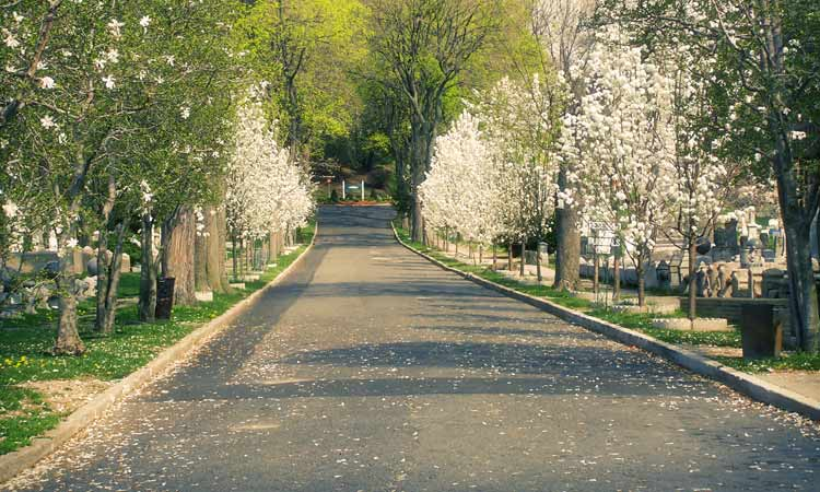 Tree-lined-road-going-into-Cypress-Hills-Cemetery