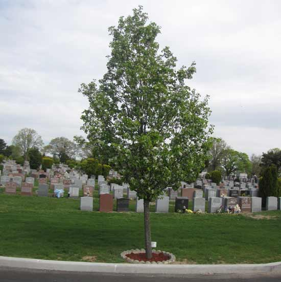 memorial tree at the cemetery